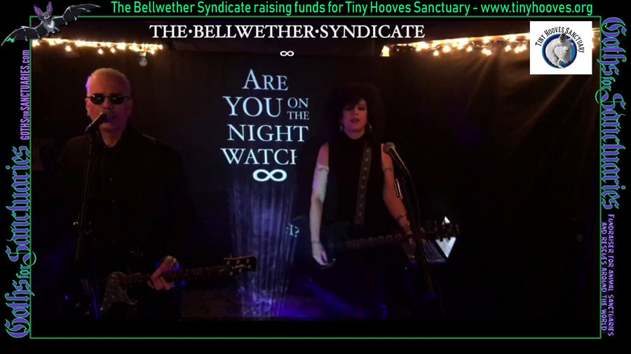 Goths for Sanctuaries: The Bellwether Syndicate